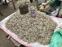 http://localhost/files/_import/Dried Dagaa, Kisumu Municipal Market_MS_20180111.jpg