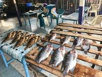 http://localhost/files/_import/Fresh Tilapia on Rack at Lwang'ni Beach_MS_20180109.jpg